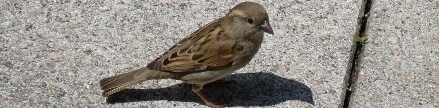 Banner - Reiki-Kindergeschichten - Vogelrettung