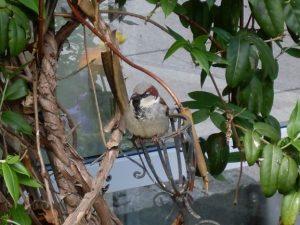 Reiki-Kindergeschichten - Vogelrettung