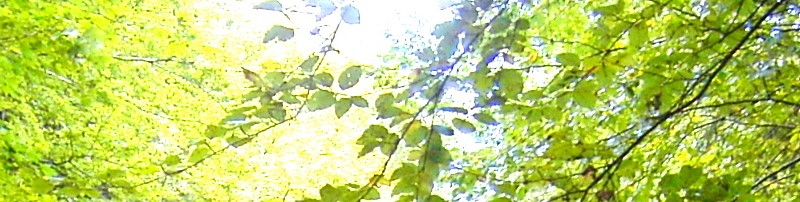 Reiki-Fit Banner - Reiki-Grad 2