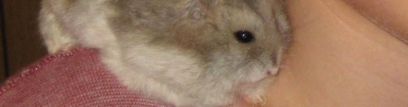 Banner - Noahs Hamster