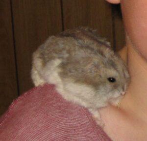 Noahs Hamster Bruno